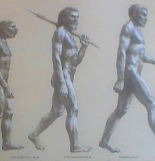 Fakta om Evolution